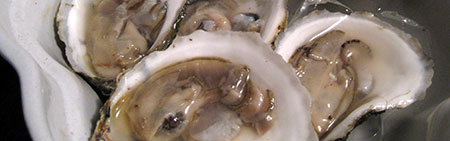 Oysters from Matunuck Oyster Farm
